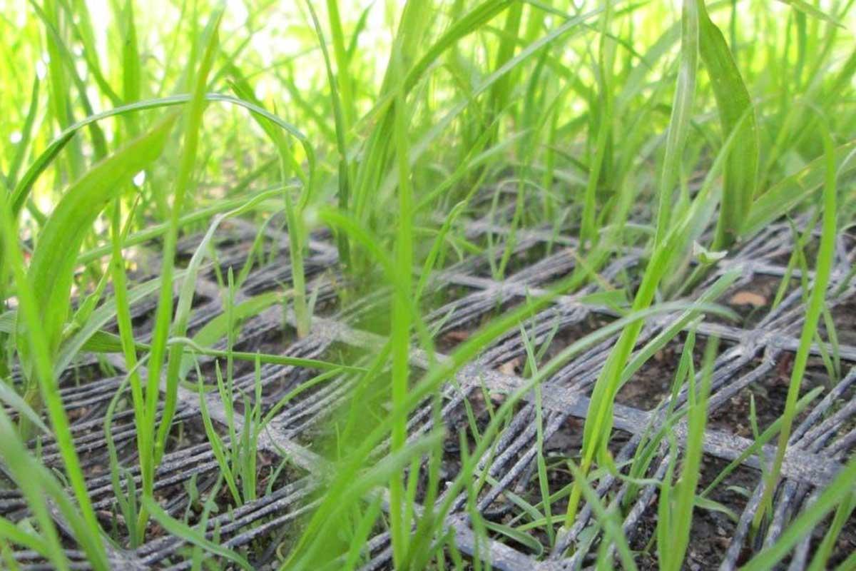 геосетка с травой